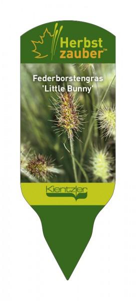 Pennisetum alopecuroides 'Little Bunny'