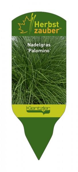 Stipa tenuissima 'Palomino'