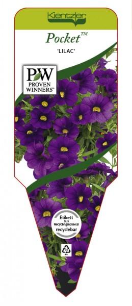 Calibrachoa Hybr. Pocket 'Lilac'