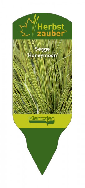 Carex brunnea 'Honeymoon'