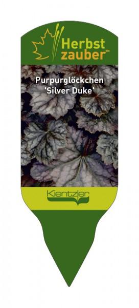 Heuchera Hybride 'Silver Duke'