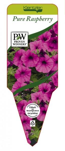 Petunia Hybrid 'Pure Raspberry'